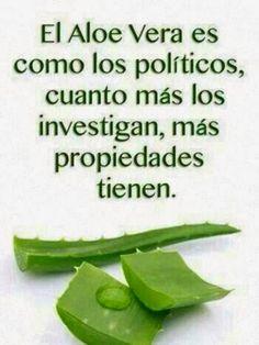 Aloe vera y políticos. #humor #risa #graciosas #chistosas #divertidas
