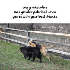 Haiku by Dog: every adventure / has greater potential when / you're with your best friends  #HaikuByDog #Haiku
