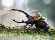 コスタリカにて、騎士とその馬。(Image Credit:Nicolas Reusens)