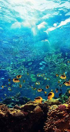 Fischschwarm School of fish - Sealife Underwater Wallpaper, Underwater Pictures, Ocean Wallpaper, Under The Ocean, Sea And Ocean, Underwater Creatures, Ocean Creatures, Underwater Photography, Nature Photography