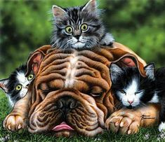 Jigsaw Puzzle The Babysitter Dogs Cats 550 Pieces Marilyn Barkhouse Eco-Friendly Wall Stickers Dogs, Photo Chat, Sleeping Dogs, Animal Paintings, Dog Art, Cats And Kittens, Pugs, Fur Babies, Pet Dogs