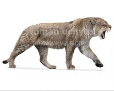Home Illustrations Panthera spelaea white background Extinct Animals, Prehistoric Animals, Black Lion, Animals Beautiful, Mammals, Paleo, Creatures, Cats, Ice Age