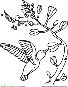 Worksheets: HUmmingbirds Coloring Page