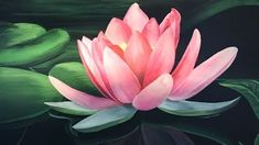 Flower HD Wallpapers, Images, PIctures, Tattoos and Desktop Background : Lotus Flower art Lotus Painting, Acrylic Painting Flowers, Acrylic Art, Diy Painting, Painting & Drawing, Painting Lessons, Acrylic Colors, Painting Tutorials, Art Lotus
