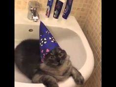 """""""wizard of cat"""" The cat, the wizard's hat, the music & dat expression. (16 seconds)"""