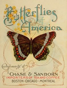 Chase & Sanborn Butterfly card
