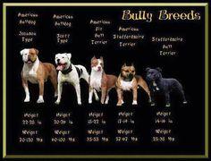 Bully breed cheat sheet