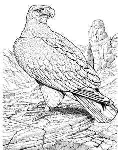 Nice eagle-coloring-pages for kids