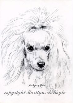PRINT DRAWING POODLEart pencil drawing by OriginalSandMore