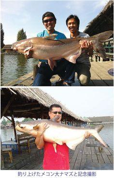 メコン大ナマズを釣る