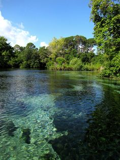 Weeki Wachee (Seminole for Little River) River, Hernando County, Florida.  Crystal Clear Water by B A Bowen