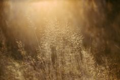 The low winter sun gives it's alms to otherwise trivial stuff in nature. Autumn Lights, Winter Sun, Behance, Nature, Autumn, Naturaleza, Nature Illustration, Off Grid, Natural