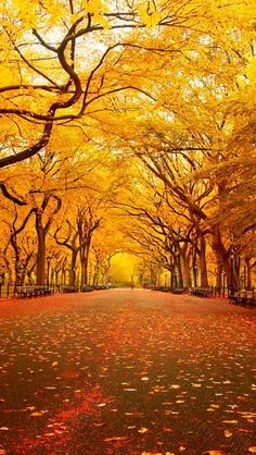 New York Central Park in Autumn nature eco beautiful places landscape travel natura peisaj World's Most Beautiful, Beautiful Places, Beautiful Park, Hello Beautiful, Beautiful Scenery, Absolutely Stunning, Beautiful Landscapes, Tree Tunnel, Belle Photo