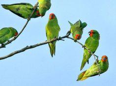 Tropical birds.