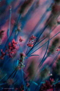 Beautiful Flowers Wallpapers, Beautiful Nature Wallpaper, Flower Wallpaper, Wallpaper Backgrounds, Flowers Nature, Wild Flowers, Landscape Photography, Nature Photography, Foto Macro