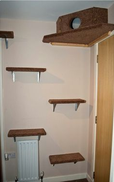 DIY Cat Tree ---- Love the Box Against the Ceiling. http://bengalcatforums.com/forums/viewtopic.php?t=10531sid=169de798c0c973e7392b13baf328c4c4