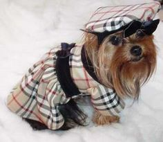 1000 Images About Burberry Dog On Pinterest Burberry
