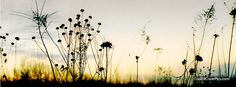 meadow shadow Facebook cover photo