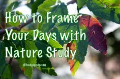 Incorporating outdoor time as part of homeschooling - How to Frame Your Days with Nature Study at Hodgepodge