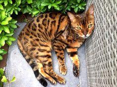 Kat ligt lekker buiten te luieren