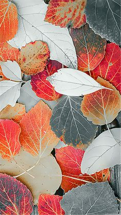 Visuals Fall Leaves What is the Right Garden Style for You - Wildlife Garden I am lucky enough to li S5 Wallpaper, Wallpaper Flower, Disney Wallpaper, Wallpaper Backgrounds, Samsung Galaxy S5, Hd Samsung, Beautiful Flowers Wallpapers, Cute Wallpapers, Autumn Leaves Wallpaper