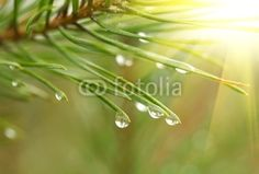 Arbre & arbuste MaMurale.com