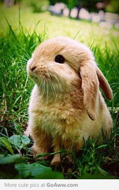 Awww it's a cute bunny
