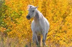 horses during autumn - Google Search
