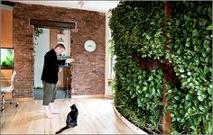 Do it yourself living wall in a New York appartment - Have a look at this great site - http://www.livingwallart.com/category/do-it-yourself/
