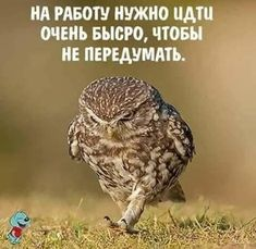 (42) Одноклассники A Funny, Funny Jokes, Walk Around The World, Dolores O'riordan, Russian Humor, Funny Phrases, Clever Quotes, Just Smile, New Quotes