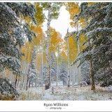 "Posts tagged: ""Aspen trees"" » Ryan Williams Photography – Flagstaff Wedding Photographer – Sedona Wedding Photographer – Phoenix Wedding Photographer"