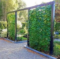 Creepers, Jardin Vertical Artificial, Pergola, Virginia Creeper, Vertical Garden Wall, Backyard Privacy, Outdoor Privacy, Weather And Climate, Diy Fence