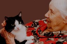 Cat Therapy: Therapy that helps people be relaxed and comforted.