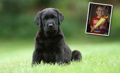 Sponsor hearing dog puppy Logan - http://www.hearingdogs.org.uk/donate/puppysponsorship