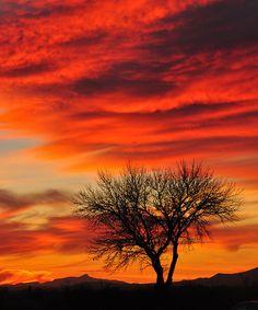 Willcox Sunset, Arizona