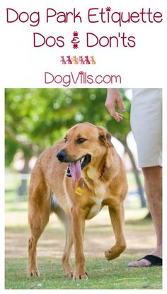 Dog park etiquette is important for making sure that all dogs are safe and they all have a good time. These simple dog park dos and don'ts can help. # diy dog park ideas Dog Park Etiquette - The Dos and Don'ts of Park Adventures - DogVills Best Dog Training, Training Plan, Brain Training, Training Equipment, Potty Training, Agility Training, Training Classes, Dog Agility, Easiest Dogs To Train