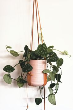 Real Plants, Growing Plants, Potted Plants, Indoor Plants, Plante Pothos, Indoor Garden, Outdoor Gardens, Dulux Valentine, Pothos Plant