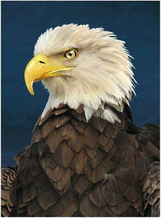 americal bald eagle painting artwork Eagle Painting, Africa Art, Bald Eagle, Wildlife, My Arts, Illustration, Bird, Photo And Video, Veronica