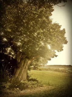 Treepia
