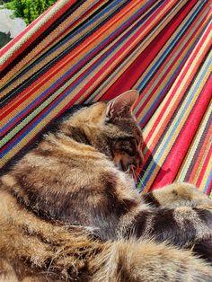 Shag Rug, Rugs, Animals, Home Decor, Shaggy Rug, Farmhouse Rugs, Animales, Decoration Home, Animaux