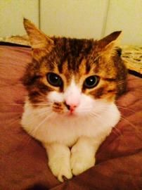 Purrlock Holmes is Adopted!