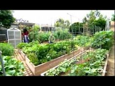Intensive Urban Gardening