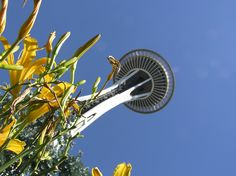 Daffodils under the Space Needle in Seattle, WA.