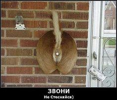 doorbell :D