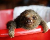 """""""Slowly, Slowly,"""" said the Sloth by Eric Carle"""