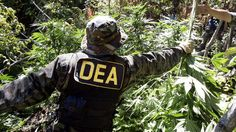 "Chuck Rosenberg, acting head of the Drug Enforcement Administration (DEA) just made highly offensive comments calling medical marijuana a ""joke."" While it's nothing new for drug war bureaucrats to ..."