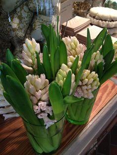 Happy Hyacinth   www.tedkennedywatson.com