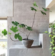 Things We Love: Turning Japandi. Japandi décor and plant life