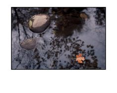 """""""Pond Reflections """" photograph in full color. """"Gambee Photos Speak Magic""""--The New York Times. Taken in autumn showing an interplay between a leaf, a rock and background reflections on the surface of a pond. One of my favorites. Original Kodachrome taken around 1975."""