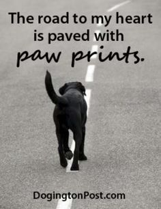 Mind Blowing Facts About Labrador Retrievers And Ideas. Amazing Facts About Labrador Retrievers And Ideas. I Love Dogs, Puppy Love, Cute Dogs, Charles Darwin, Black Labs, Black Labrador, Dog Rules, Labrador Retriever Dog, Tier Fotos